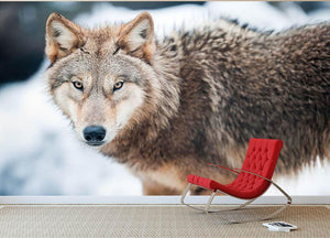 Wolf standing in the snow Wall Mural Wallpaper - Canvas Art Rocks - 2