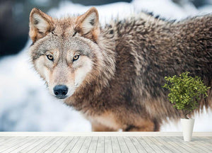 Wolf standing in the snow Wall Mural Wallpaper - Canvas Art Rocks - 4