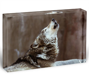 Wolves howl in Moscow Zoo Acrylic Block - Canvas Art Rocks - 1