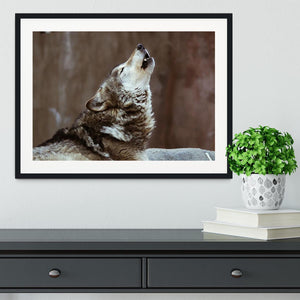 Wolves howl in Moscow Zoo Framed Print - Canvas Art Rocks - 1