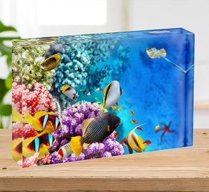 World with corals and tropical fish Acrylic Block - Canvas Art Rocks - 2