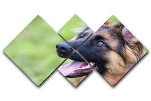 Young dog german shepherd on the grass in the park 4 Square Multi Panel Canvas - Canvas Art Rocks - 1