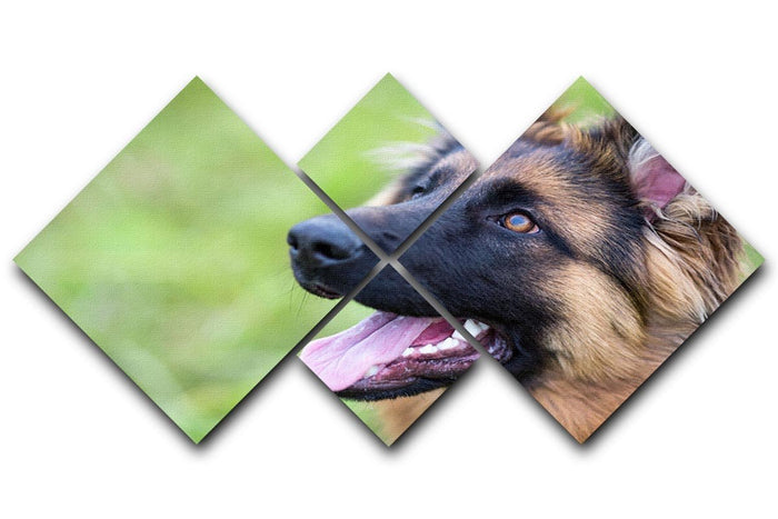 Young dog german shepherd on the grass in the park 4 Square Multi Panel Canvas