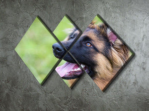 Young dog german shepherd on the grass in the park 4 Square Multi Panel Canvas - Canvas Art Rocks - 2