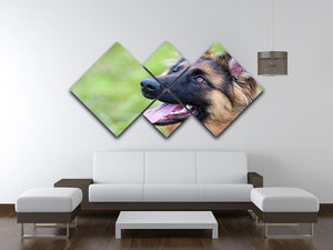 Young dog german shepherd on the grass in the park 4 Square Multi Panel Canvas - Canvas Art Rocks - 3