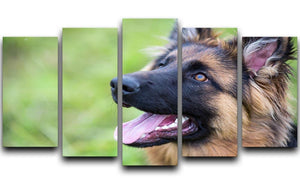 Young dog german shepherd on the grass in the park 5 Split Panel Canvas - Canvas Art Rocks - 1