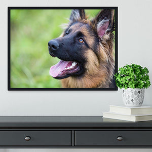 Young dog german shepherd on the grass in the park Framed Print - Canvas Art Rocks - 2