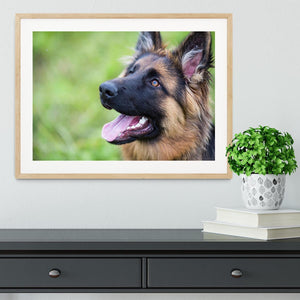 Young dog german shepherd on the grass in the park Framed Print - Canvas Art Rocks - 3