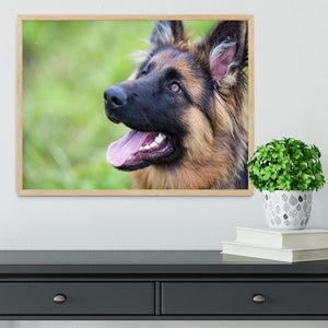Young dog german shepherd on the grass in the park Framed Print - Canvas Art Rocks - 4