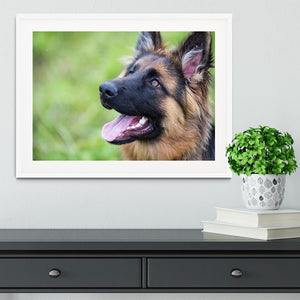 Young dog german shepherd on the grass in the park Framed Print - Canvas Art Rocks - 5