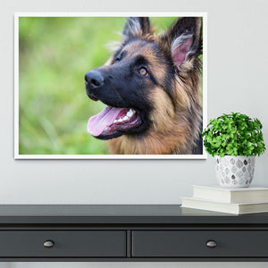 Young dog german shepherd on the grass in the park Framed Print - Canvas Art Rocks -6