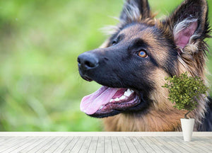 Young dog german shepherd on the grass in the park Wall Mural Wallpaper - Canvas Art Rocks - 4