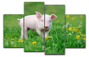 Young funny pig 4 Split Panel Canvas - Canvas Art Rocks - 1