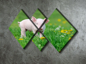 Young funny pig 4 Square Multi Panel Canvas - Canvas Art Rocks - 2