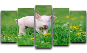 Young funny pig 5 Split Panel Canvas - Canvas Art Rocks - 1