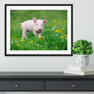 Young funny pig Framed Print - Canvas Art Rocks - 1