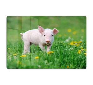 Young funny pig HD Metal Print - Canvas Art Rocks - 1