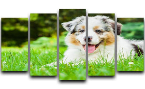 Young puppy lying on fresh green grass in public park 5 Split Panel Canvas - Canvas Art Rocks - 1