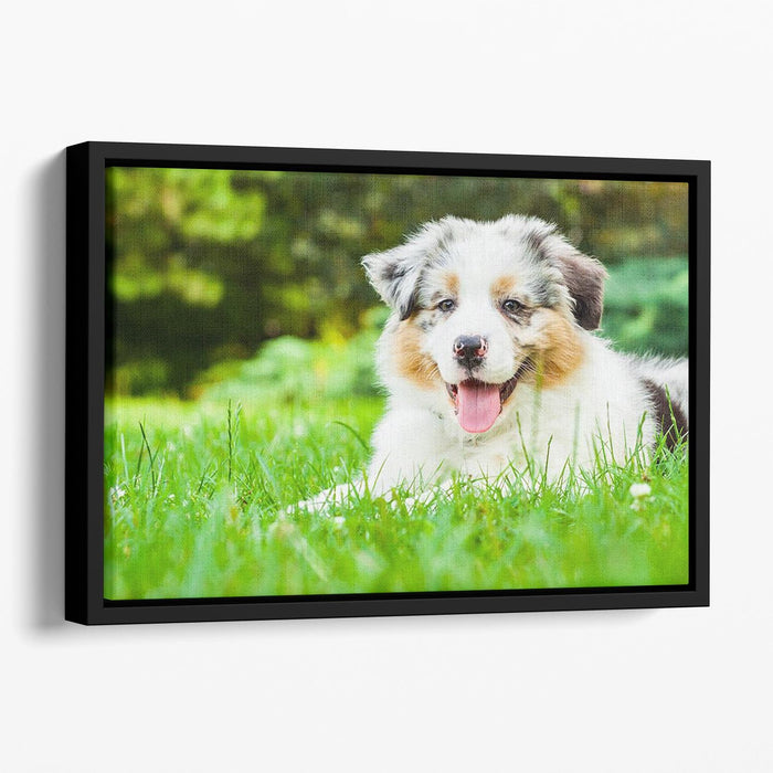 Young puppy lying on fresh green grass in public park Floating Framed Canvas