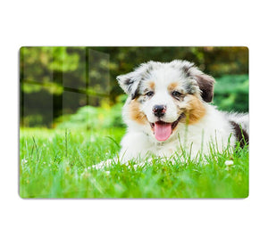 Young puppy lying on fresh green grass in public park HD Metal Print - Canvas Art Rocks - 1