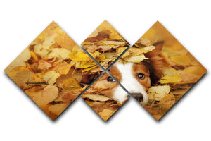 Young red border collie dog playing with leaves 4 Square Multi Panel Canvas - Canvas Art Rocks - 1