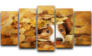 Young red border collie dog playing with leaves 5 Split Panel Canvas - Canvas Art Rocks - 1