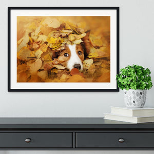 Young red border collie dog playing with leaves Framed Print - Canvas Art Rocks - 1