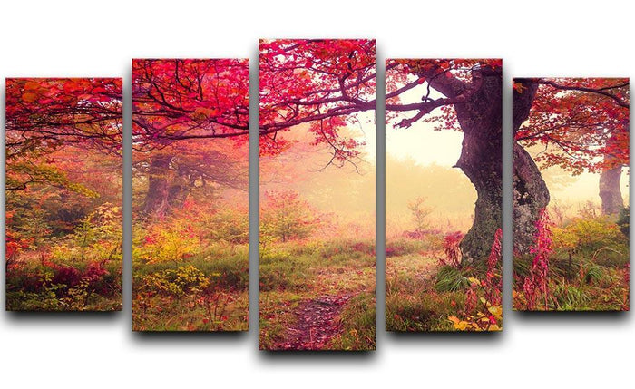 autumn trees in forest 5 Split Panel Canvas