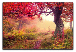 autumn trees in forest Canvas Print or Poster  - Canvas Art Rocks - 1