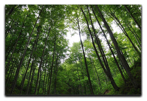deciduous forest Canvas Print or Poster  - Canvas Art Rocks - 1