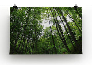 deciduous forest Canvas Print or Poster - Canvas Art Rocks - 2