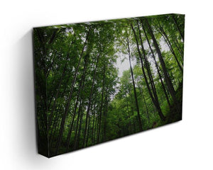 deciduous forest Canvas Print or Poster - Canvas Art Rocks - 3