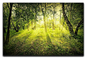 deep forest on summer morning Canvas Print or Poster  - Canvas Art Rocks - 1