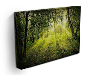 deep forest on summer morning Canvas Print or Poster - Canvas Art Rocks - 3