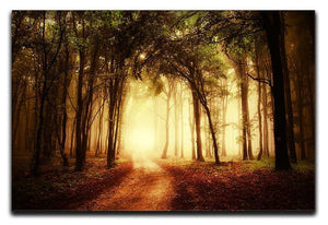 golden forest at autumn Canvas Print or Poster  - Canvas Art Rocks - 1