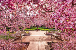 spring foliage near the National Mall Wall Mural Wallpaper - Canvas Art Rocks - 1