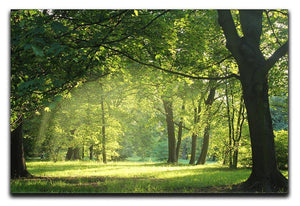 trees in a summer forest Canvas Print or Poster  - Canvas Art Rocks - 1