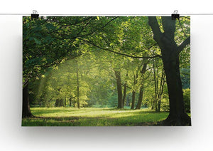 trees in a summer forest Canvas Print or Poster - Canvas Art Rocks - 2