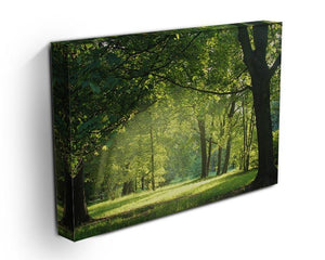 trees in a summer forest Canvas Print or Poster - Canvas Art Rocks - 3