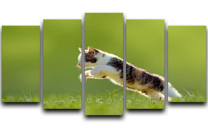 young cat jumps over a meadow in the backlit 5 Split Panel Canvas - Canvas Art Rocks - 1