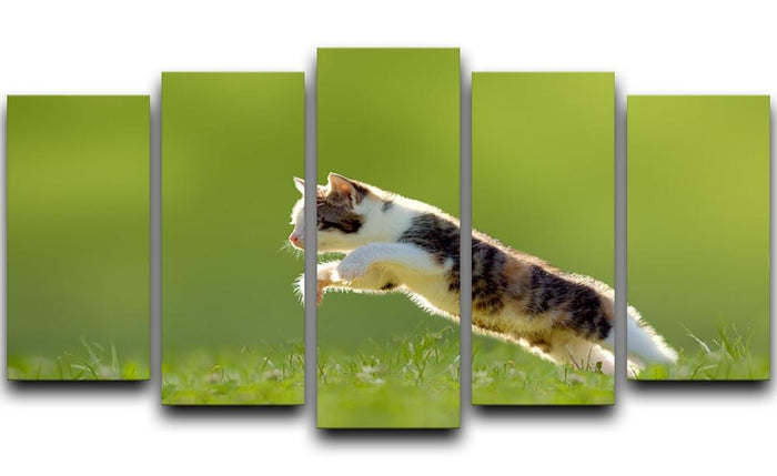 young cat jumps over a meadow in the backlit 5 Split Panel Canvas