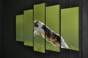 young cat jumps over a meadow in the backlit 5 Split Panel Canvas - Canvas Art Rocks - 2