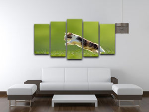 young cat jumps over a meadow in the backlit 5 Split Panel Canvas - Canvas Art Rocks - 3