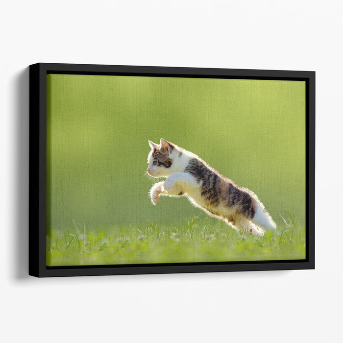 young cat jumps over a meadow in the backlit Floating Framed Canvas