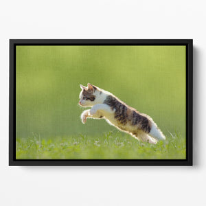 young cat jumps over a meadow in the backlit Floating Framed Canvas - Canvas Art Rocks - 2