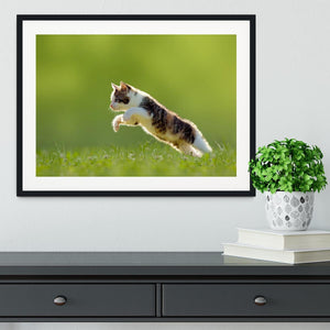 young cat jumps over a meadow in the backlit Framed Print - Canvas Art Rocks - 1