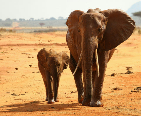 Save Elephants