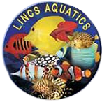 Lincs Aquatics Ltd