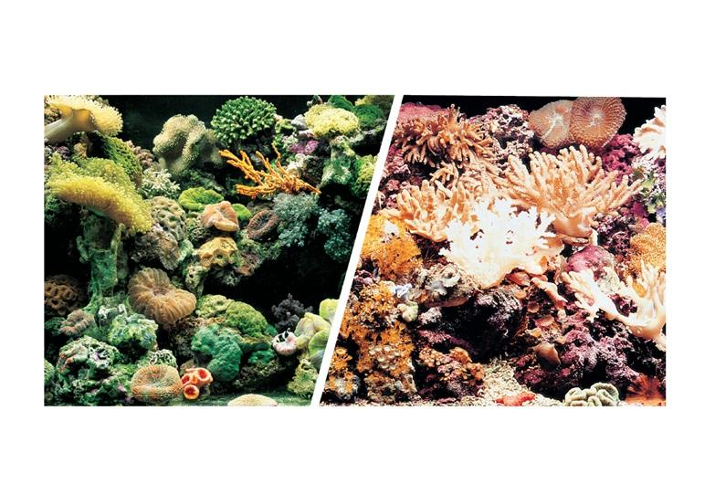 Marina Double Sided Aquarium Background, Marine Reef/Coral Scenes, 30cm high per 30cm Long