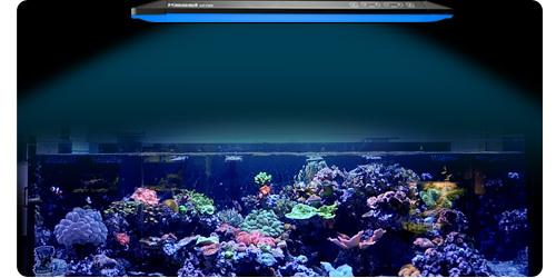 Kessil AP700 LED Light Panel-Marine lighting-Lincs Aquatics Ltd